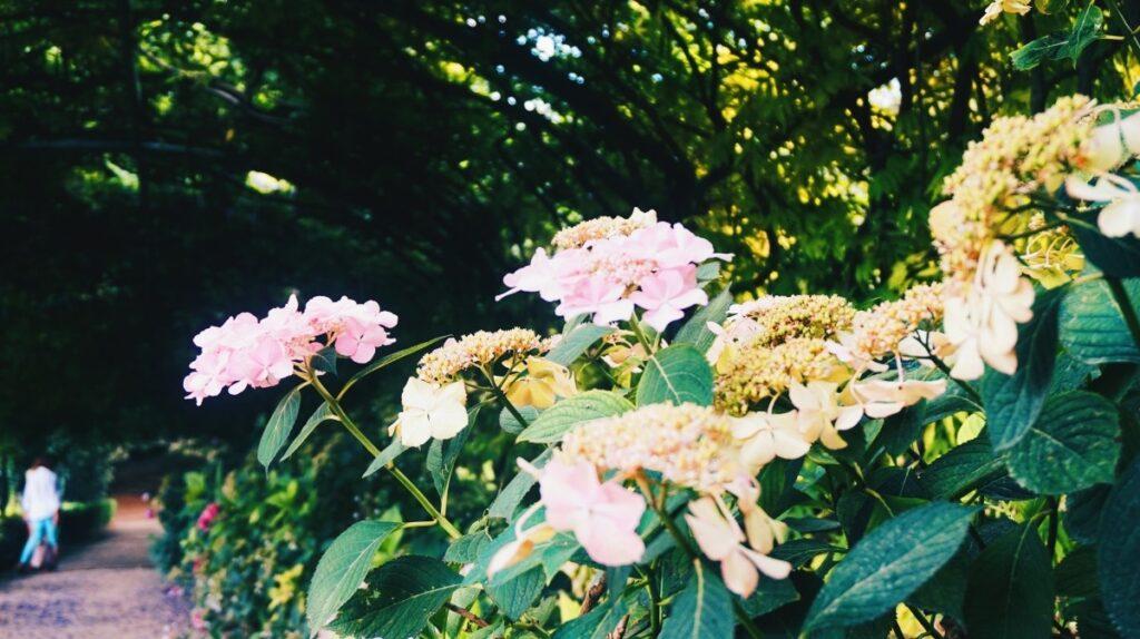 Kwiaty w Ogrodzie Bardini we Florencji