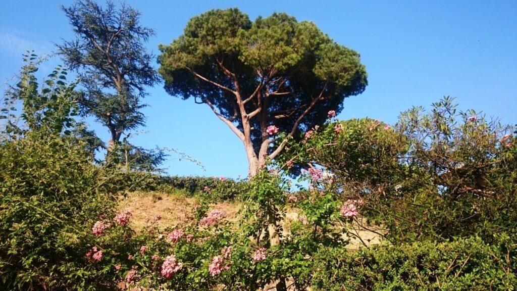 giardino-delle-rose-firenze