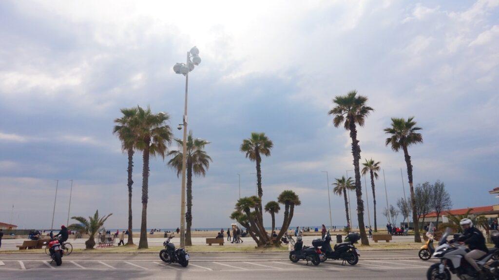 Palms in Viareggio