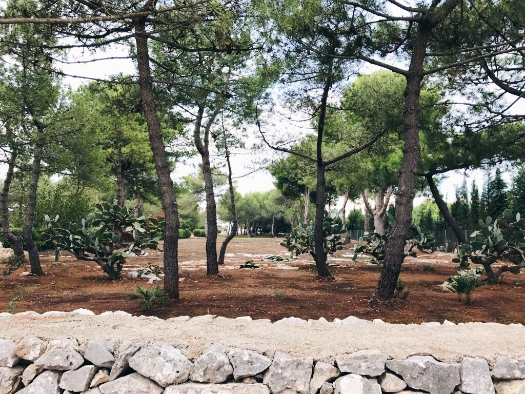 Rosliny w Apulii