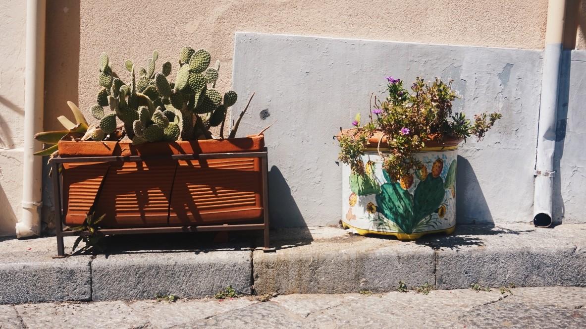 Cefalu we Włoszech - roślinki