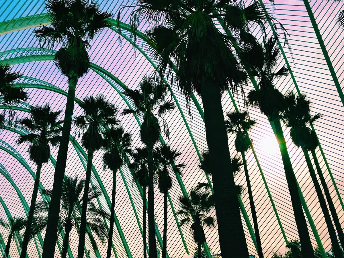 Palmy w Ciudad de las Artes w Walencji