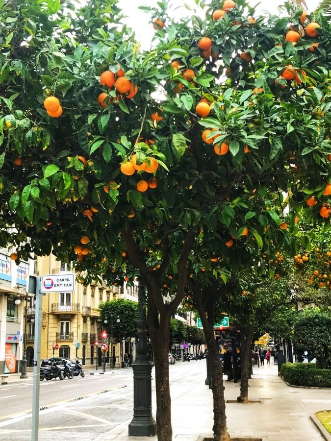 Drzewka pomarańczowe w Walencji